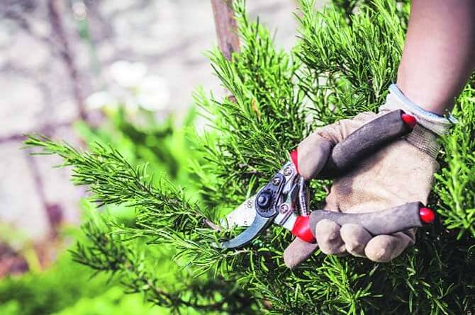 Why Is So Important To Have Your Trees And Plants Pruned