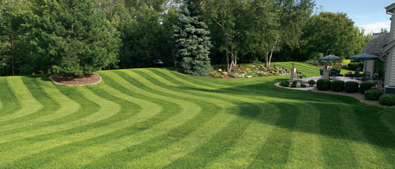 Commercial Landscaping Services In Tampa Bay