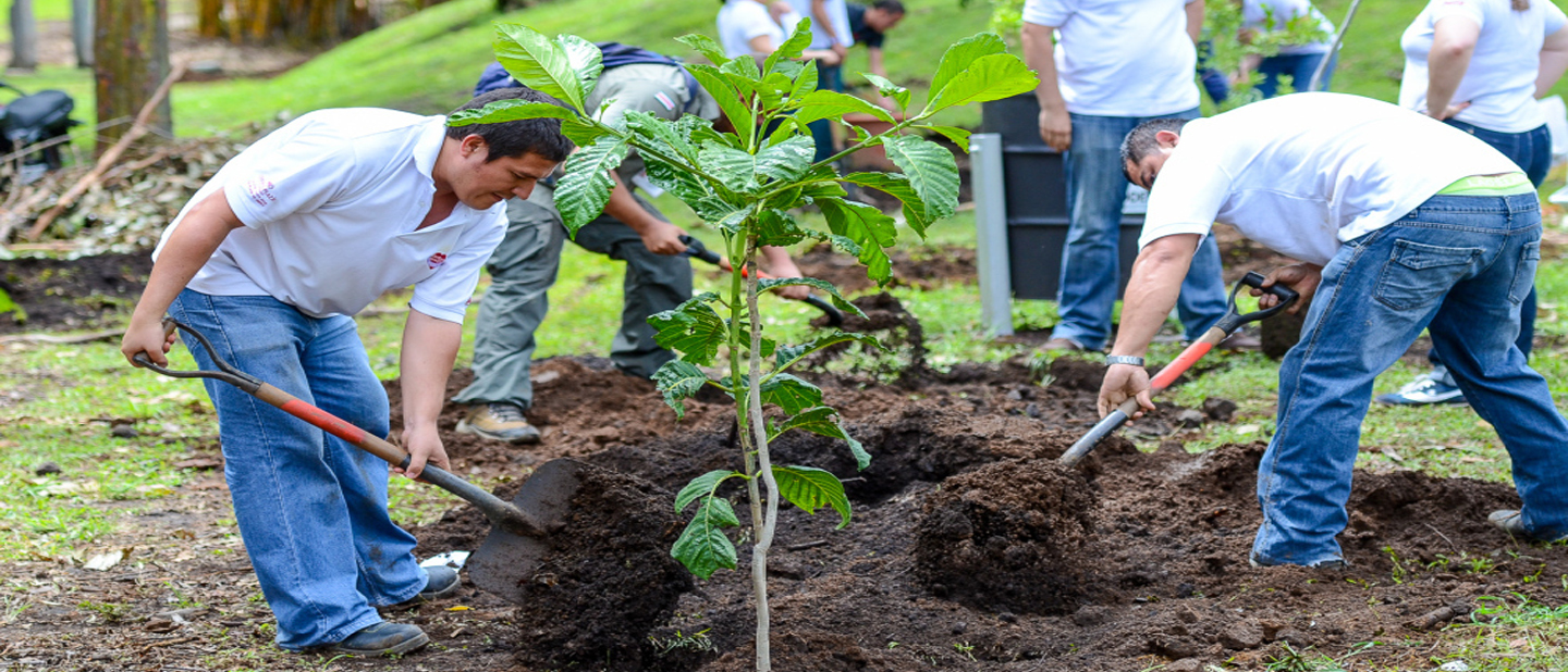 plant trees to protect climate