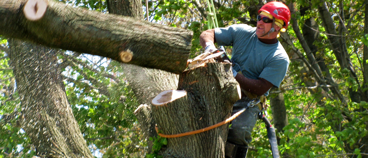 safe removal of dead trees