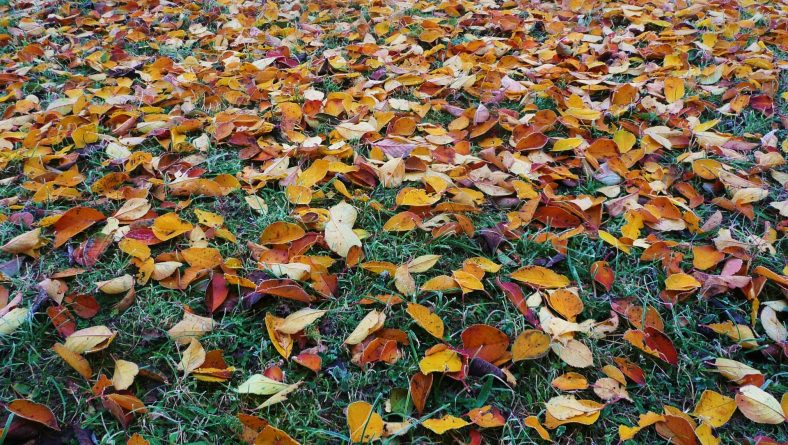 7 Fall Cleanup Essentials For All Landscapes
