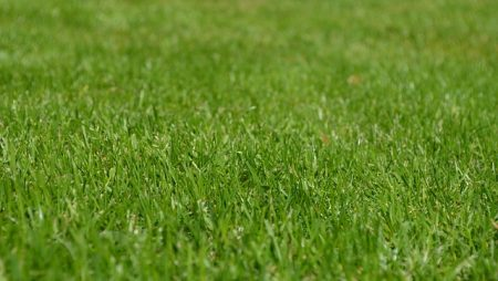 Prepare Your Lawn For Florida's Winter