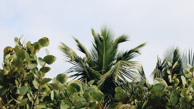 8 Florida-Friendly Trees and Shrubs to Plant on Your Property