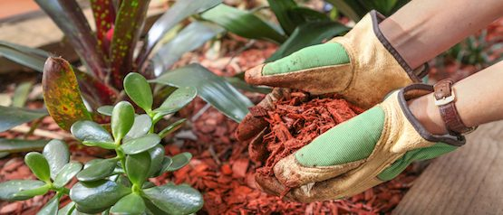 professional mulch installation