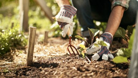 The Top 6 Ways to Save on Landscaping Maintenance Costs