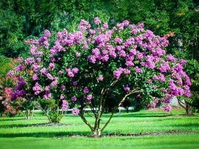 10 Florida Friendly Trees Shrubs To Plant Landcrafters Fl