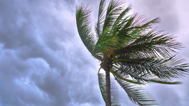Hurricane Season is Approaching – Is your Landscape Ready?