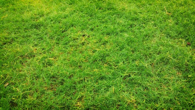 Cures for the Top 3 Lawn Problems in Florida