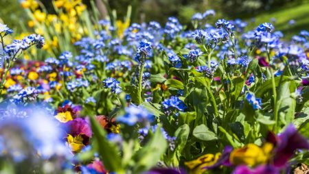 Flower Beds and You: Understanding the Importance of Regularly Scheduled Maintenance