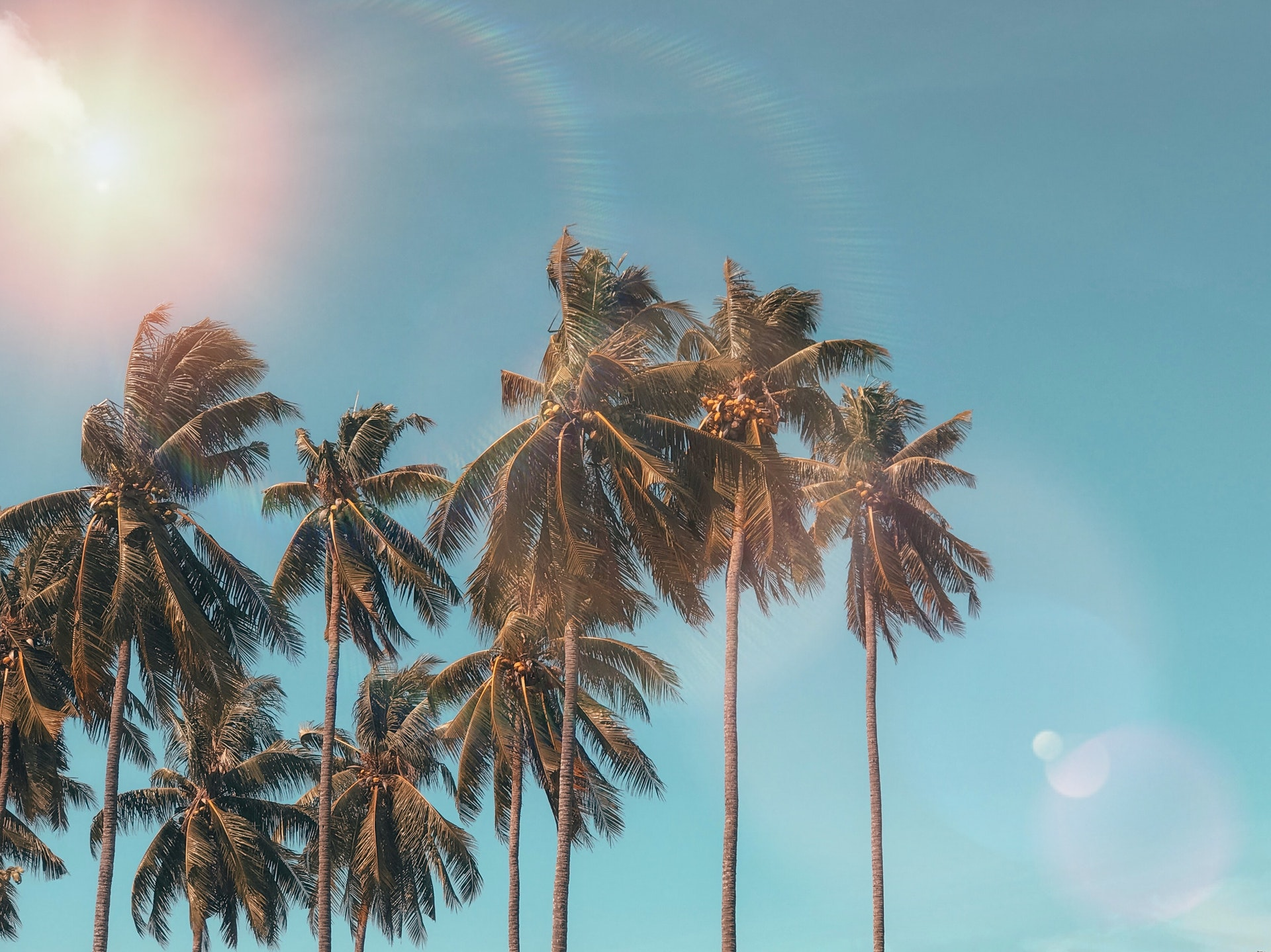 An Ode To The Palm Tree Our Top Five Palms For Florida Yards