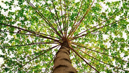 Why Raising and Lifting a Tree Canopy is Important (and Why We Include it in Our Landscape Management Routine)