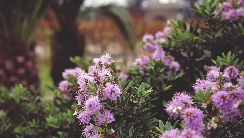 Shrubs 101: The Florida Shrub Maintenance Guide You've Been Missing
