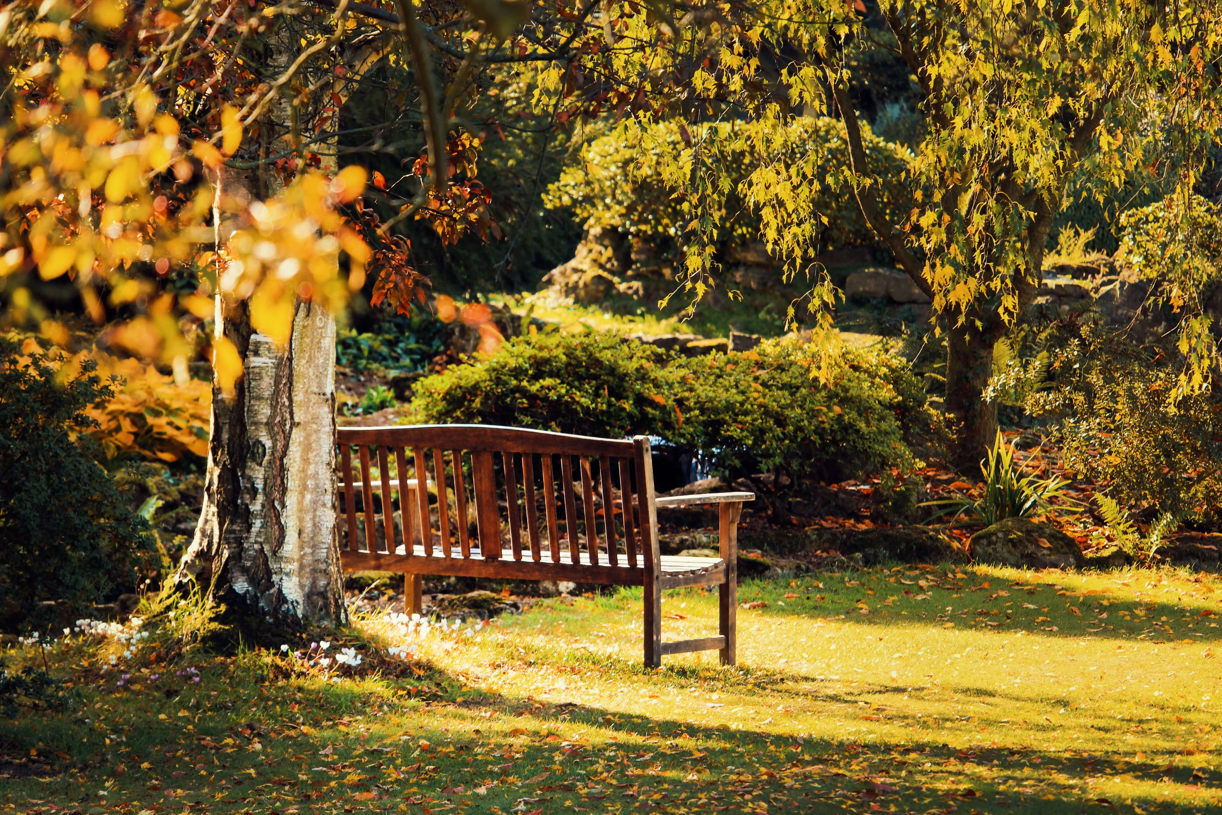 park during fall with yellow falling leave and brown park bench
