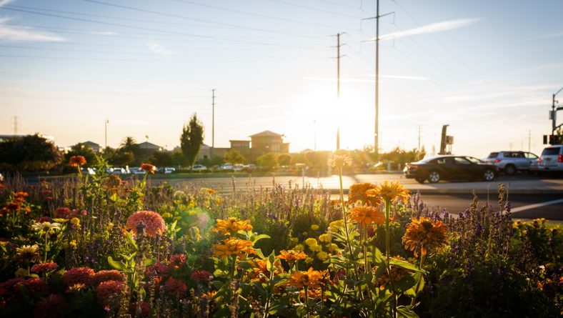Retail 101: Make Sure Your Landscaping is Top-Notch