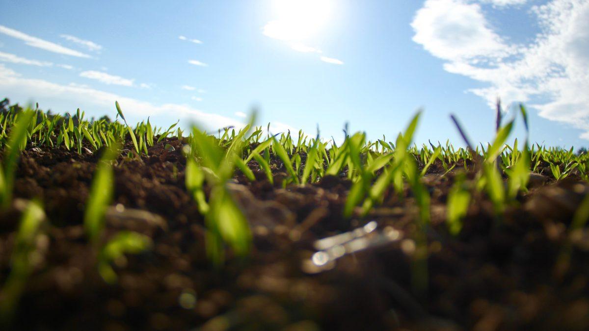 grass-1148913_1920