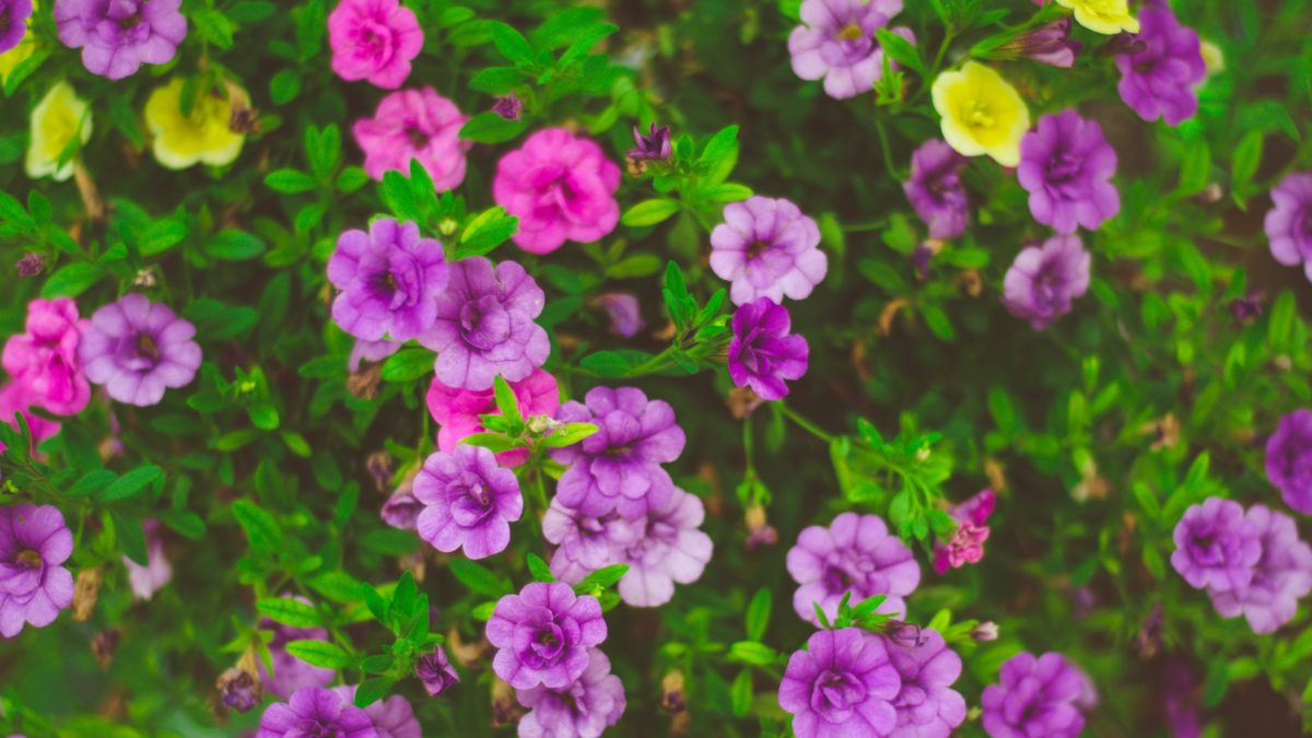 Beautiful spring blooms don't just happen -- they require quality landscaping, something that Landcrafters Florida places huge emphasis on. If you seek Clearwater landscaping that provides you with those beautiful blooms you want, make sure your commerical lawn and landscape service focuses on April irrigation checks!