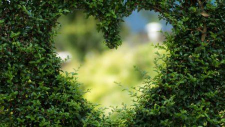Rejuvenation Pruning in Florida: Take Your Pruning to the Next Level