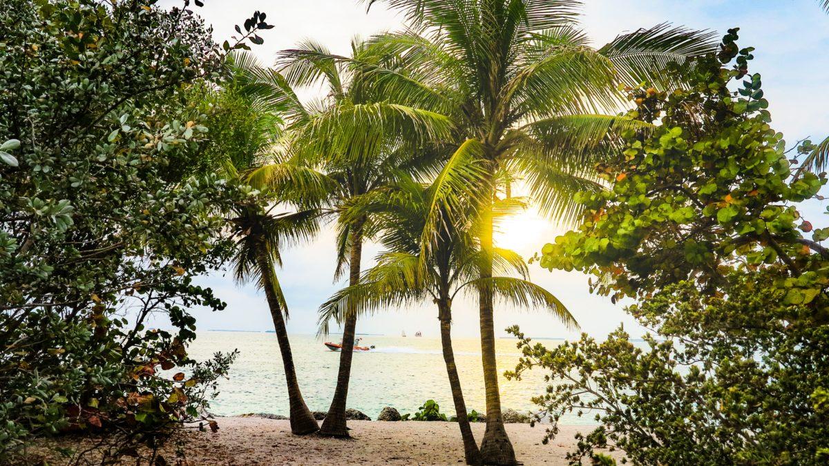 beach-coconut-trees-florida-2225499