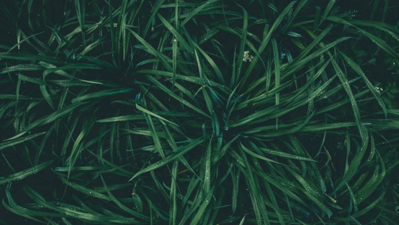 The Top 6 Lawn Weeds in Florida & How to Watch Out For 'Em