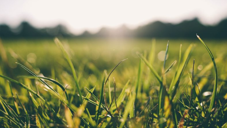 How to Recognize Drought Stress in Your Lawn (and What You Can Do to Remedy It)