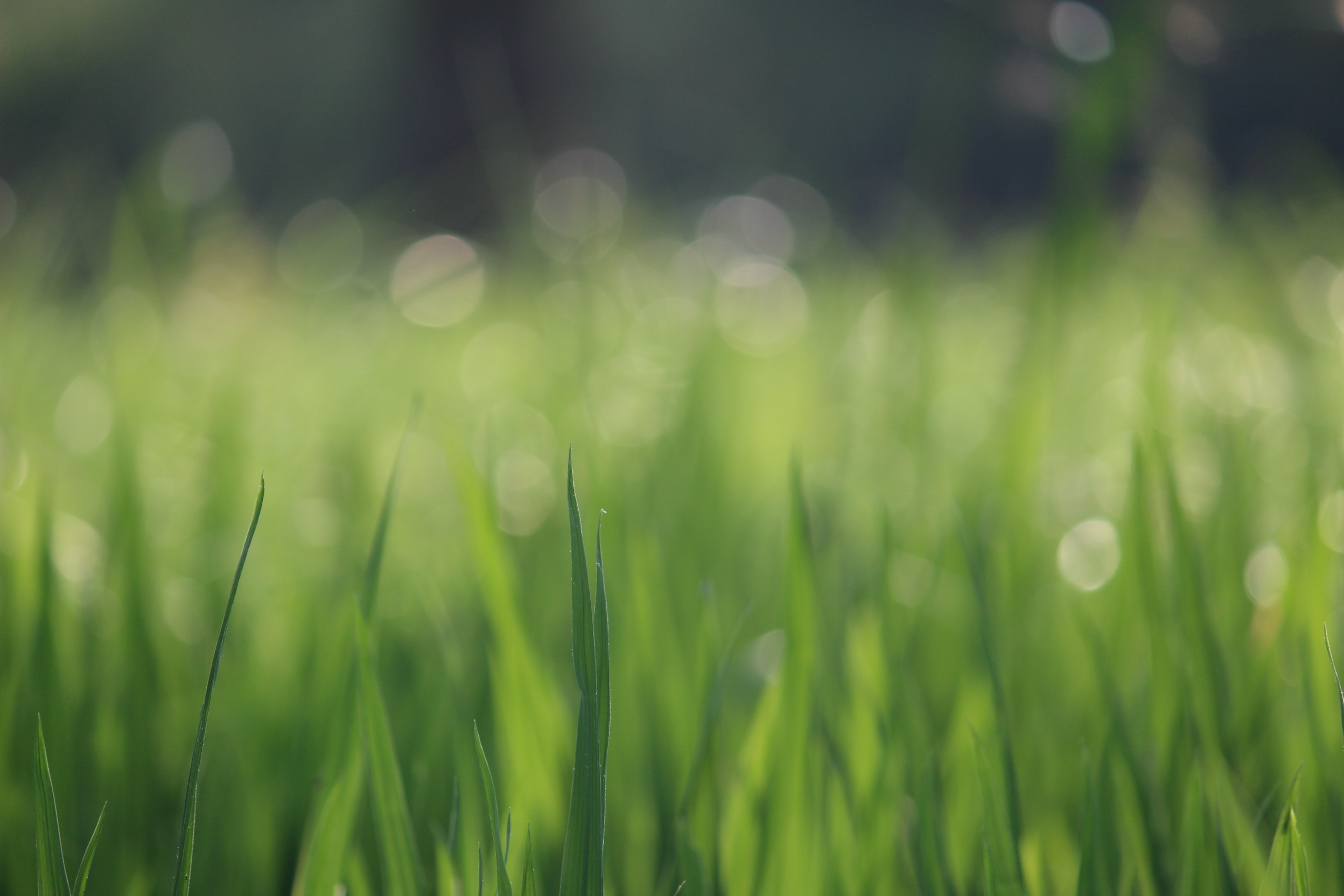 The Top 4 Types Of Grass You Need To Consider For Florida Lawns