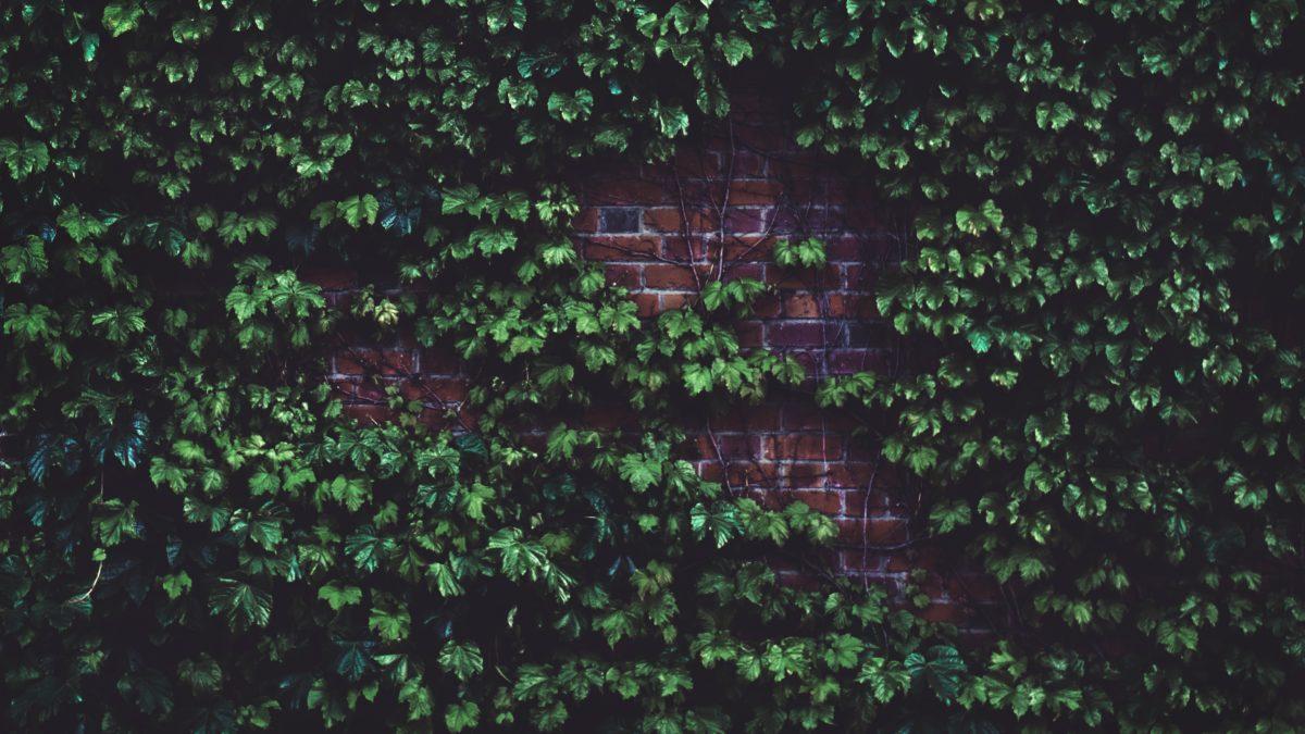 brick-wall-color-foliage-1171719