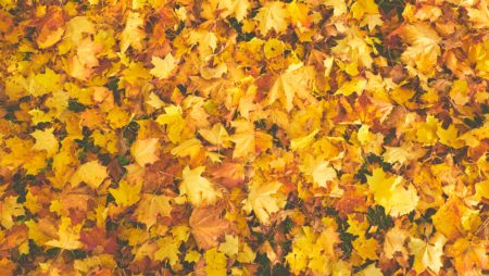 Fall is Coming, Are You Ready? Three Commercial Landscape Trends of Note