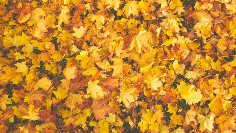 Fall is Coming, Are You Ready? 3 Fall Commercial Landscape Trends