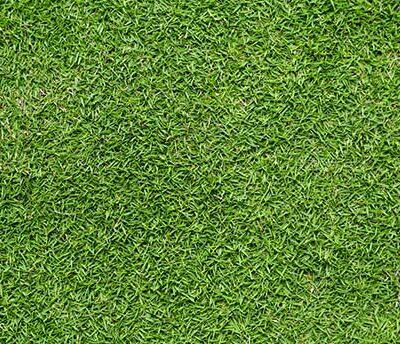 bermudagrass2