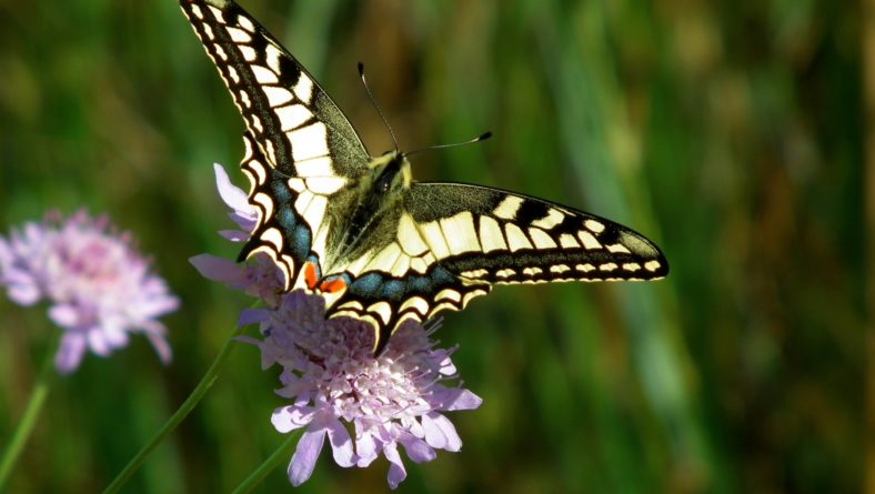 Add Some Fun to Your Landscape: How to Create the Ultimate Butterfly Garden