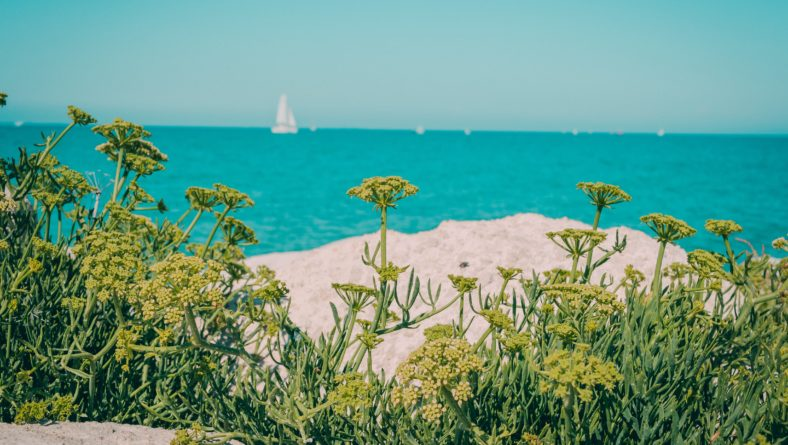 The Best Salt-Tolerant Plants for Your Coastal Florida Landscape