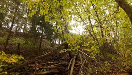 Getting to the Root of the Problem: What to Do When Tree Roots Become Dangerous