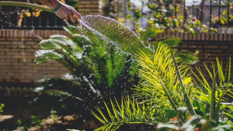 Why Your Landscape Needs a Fine Gardener