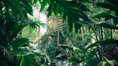 Five Essential Florida Landscape Design Elements